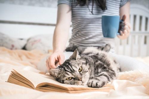 飼い主が読んでいる本の上に寝転がる猫