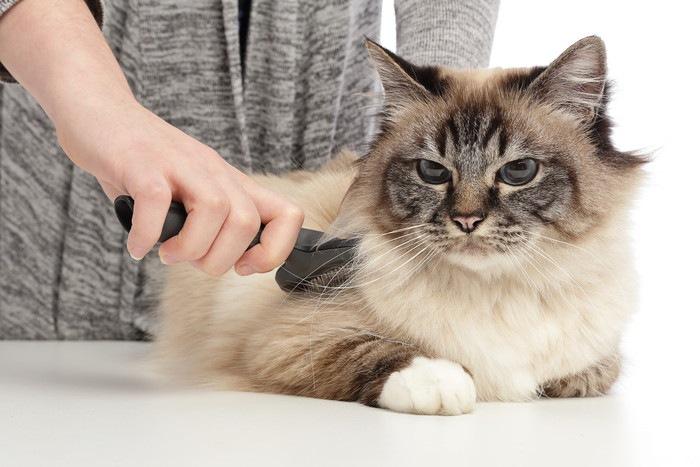 ブラッシングされる長毛の猫
