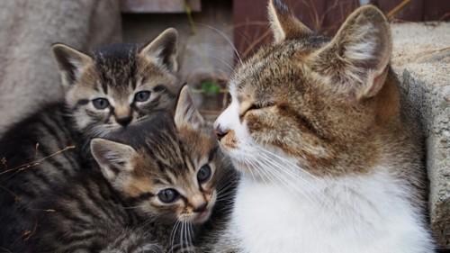 母猫ときょうだい猫