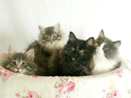 猫4匹盛り合わせ