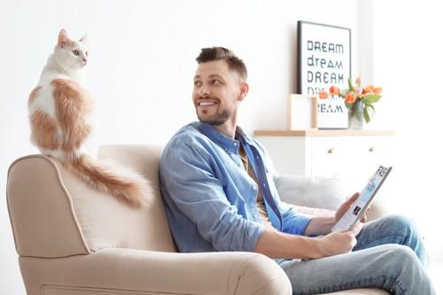 ソファの上にいる男性と猫