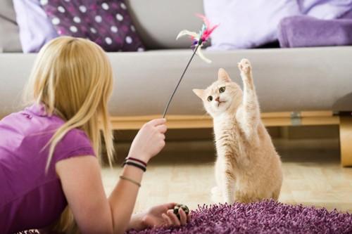 女性の使うじゃらしで遊ぶ猫