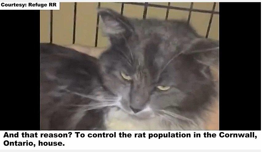 ネズミ除け