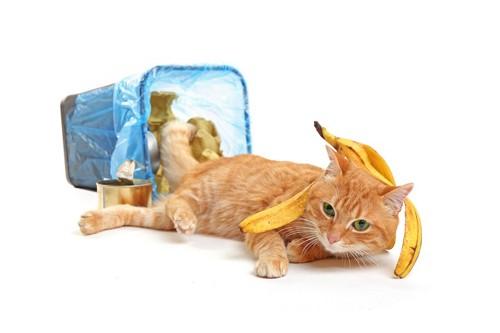 ゴミ箱を倒してバナナの皮を頭に乗せた猫