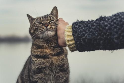 嬉しそうな猫