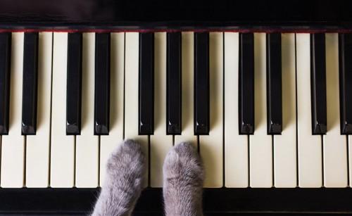 ピアノの鍵盤の上に置かれた猫の手