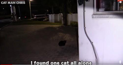 洗車場の中にいる黒猫