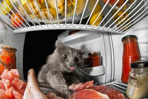 舌をだして冷蔵庫の中の肉を見る猫