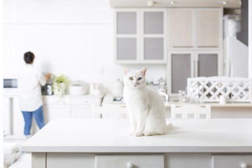 テーブルの上に座る白猫