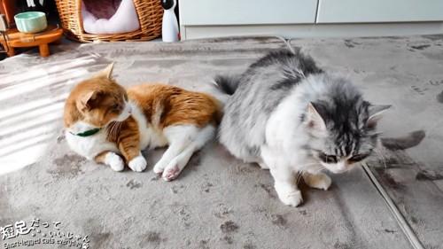 茶白猫と長毛猫