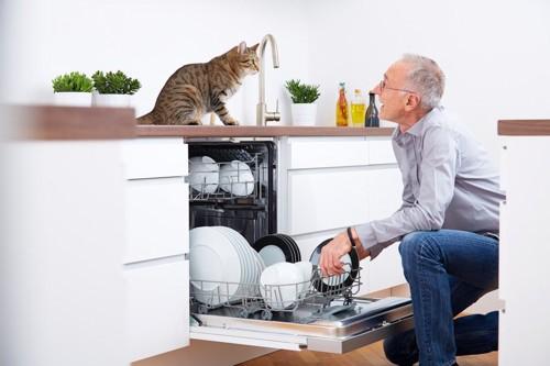 食洗機の引き出しを開ける男性を見つめる猫