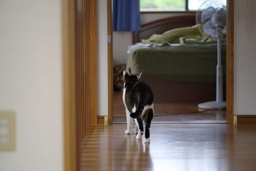 部屋を移動する猫