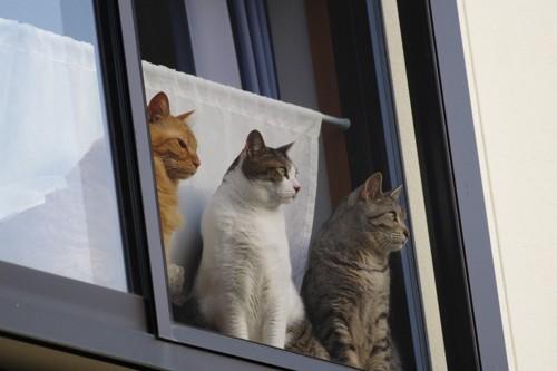 網戸越しに同じ方向を見る3匹の猫