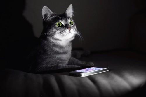 暗い部屋の中で光る猫の目とスマートフォン