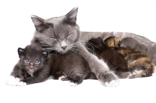 眠る母猫と子猫たち