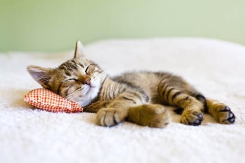 夏用の枕を使って眠る子猫