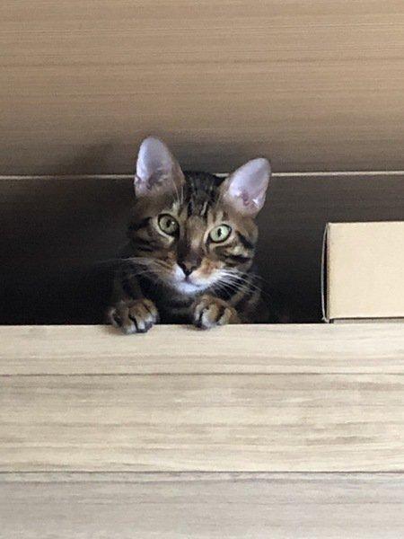 箪笥の上に居る猫