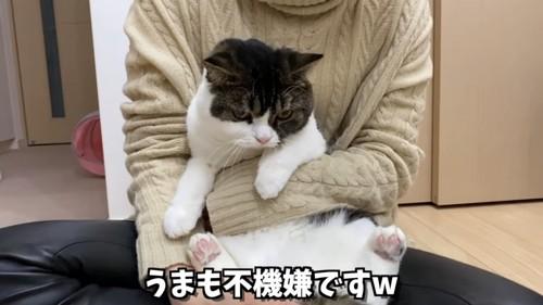 抱っこされる立ち耳猫