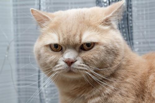 匂いを察知した猫