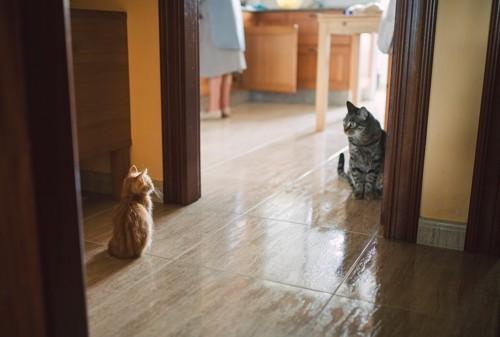 少し離れて見つめ合う二匹の猫