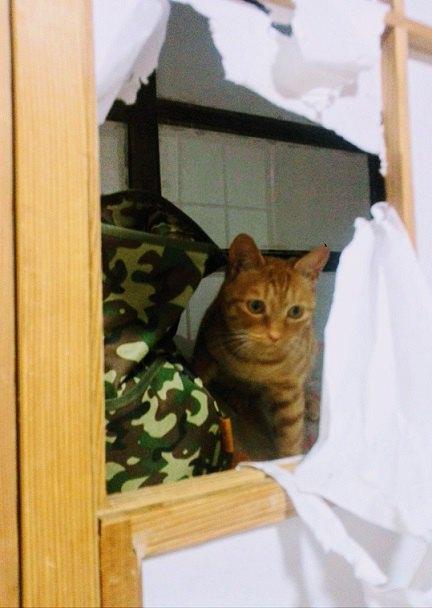 障子の穴からネコが覗いている画像