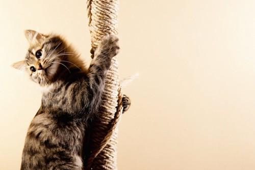 キャットタワーの柱に登る猫