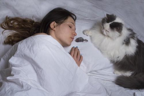眠っている飼い主のそばにネズミのおもちゃをおく猫
