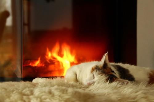 暖炉の前で眠る猫
