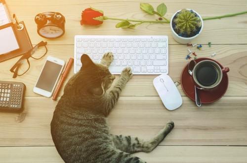 キーボードをいじる猫