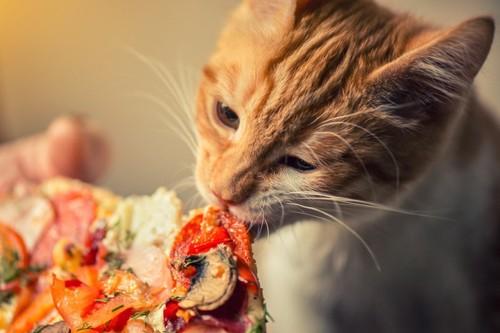 ピザを食べる猫