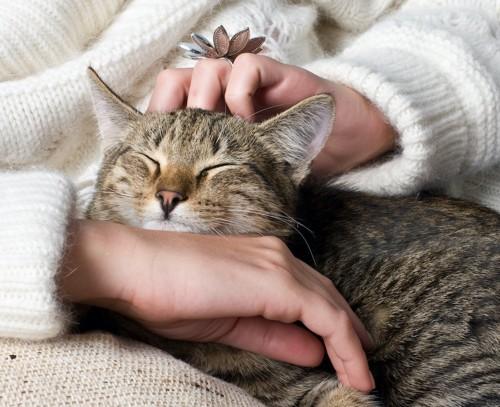 セーターを着た人に寄り添って撫でられている猫