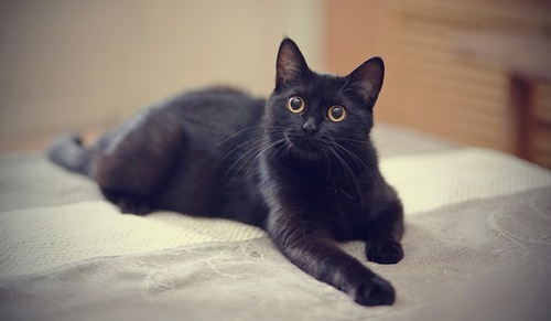 目が真ん丸な黒猫