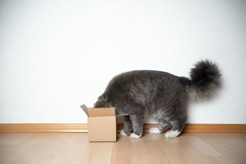 何かを探している猫