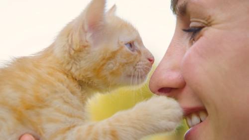飼い主の顔にタッチする子猫