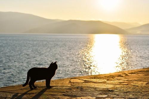 朝日に向かう猫