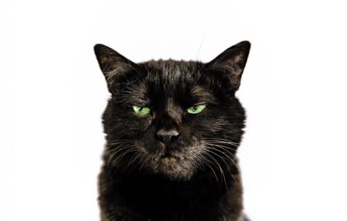 目を反らす猫