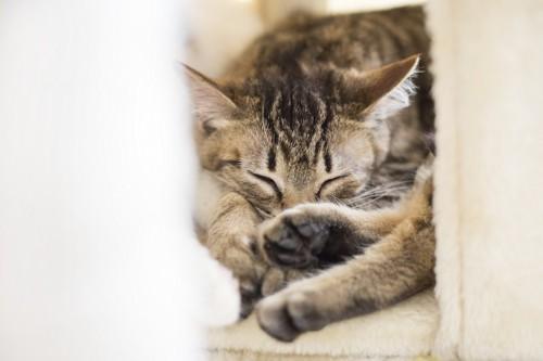 お気に入りのベッドで眠る猫