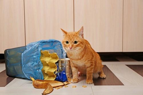 倒れるゴミ箱と猫