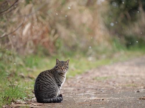 振り返る野良猫