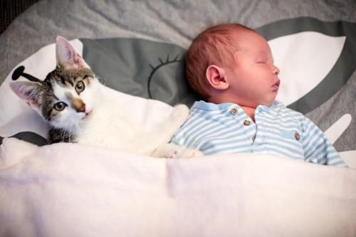 赤ちゃんと添い寝する猫