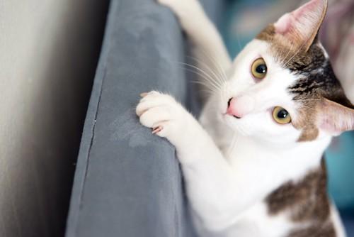 ソファーに爪を立てる猫