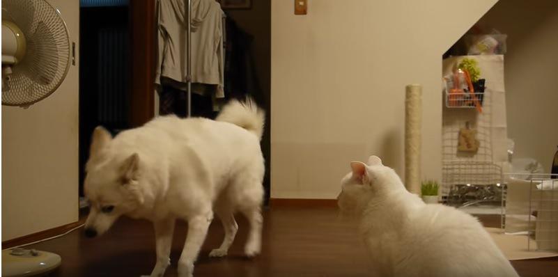 立ち上がる犬と見つめる猫