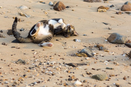 砂の上で転がる猫