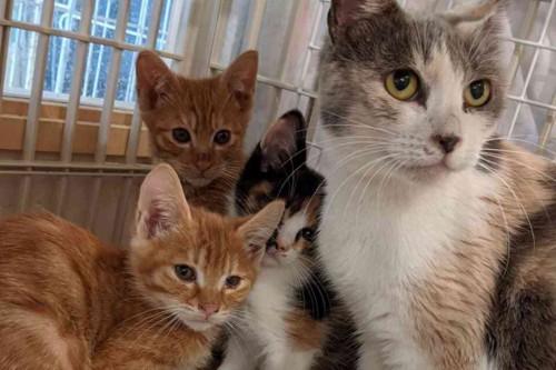 保護された母子猫