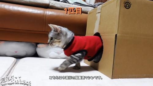 箱から出てくる猫