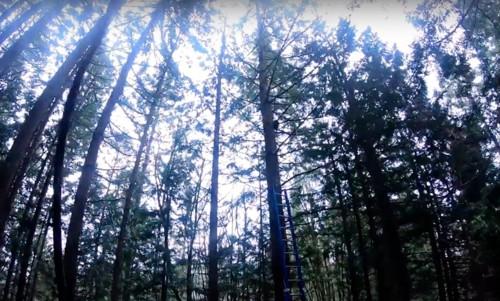 MAXが立ち往生する木
