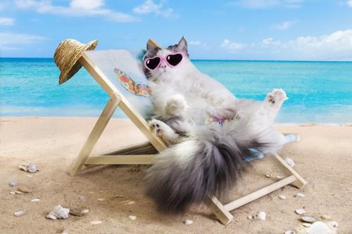 ビーチでリラックスする猫