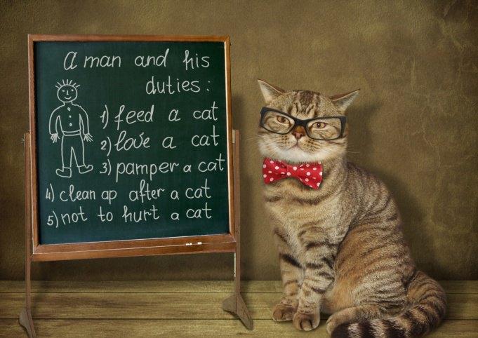 講義している猫