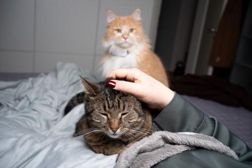 片方の猫だけを撫でる人