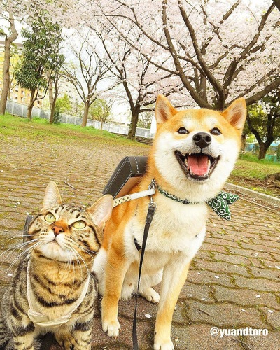 ランドセルを背負う猫と犬